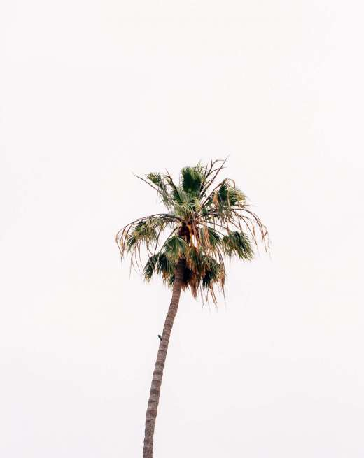 selective-focus-photography-of-coconut-palm-2441833